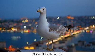 Fly gull bird city light - Flying bird fence gull city...