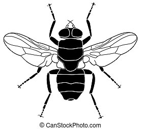 Fly - Illustration of a common fly