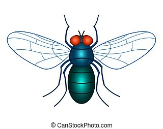 Fly insect illustration