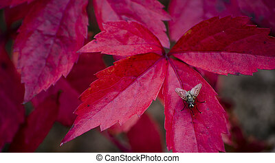 fly on a red leaf