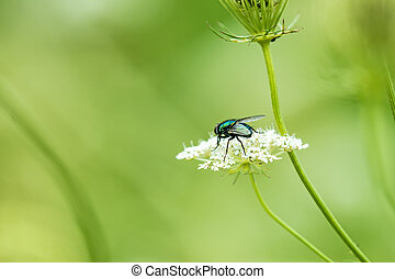 fly on a wild flower