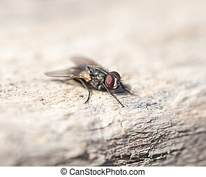 fly on a wooden background