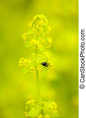 fly on a yellow wild flower