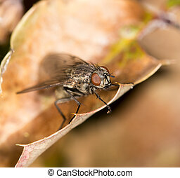 Fly on autumn leaves in nature. close-up