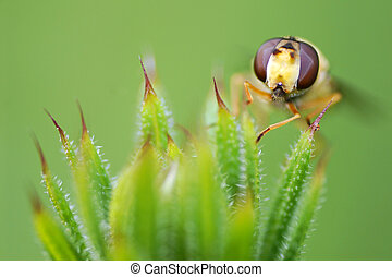 Fly on grass