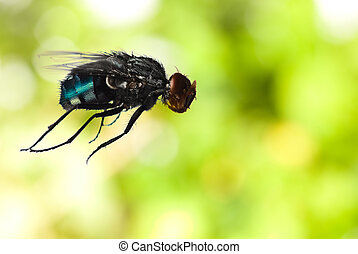 fly on green background