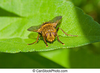 Fly on leaf 13