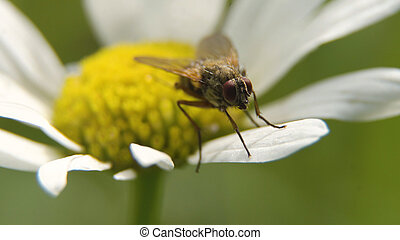 Fly on the flower. Close up.