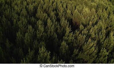 fly over a green forest above the treetops beautiful natural landscape shooting from a drone 4k video