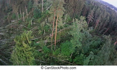 fly over wind-fallen trees