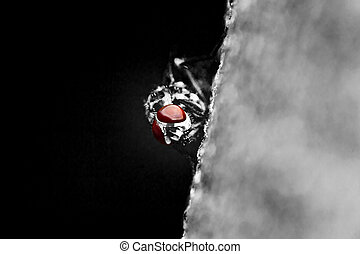 Fly Red Eyes - Black and White Photo Of A Common Fly With...