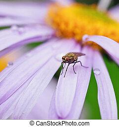fly sits on a beautiful purple daisy