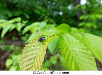 Fly Sitting on a Green Leaf