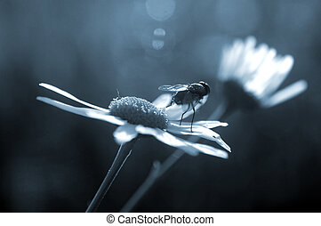 Fly stands on daisy