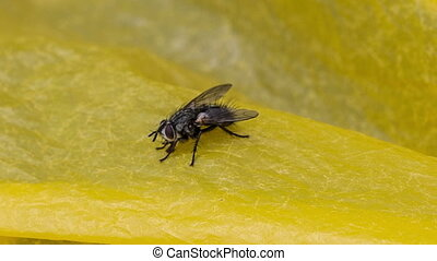 Fly - The fly creeps on a yellow surface