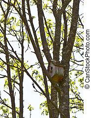 flycatcher birdhouse