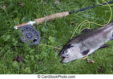 A freshly caught rainbow trout next to a fly rod