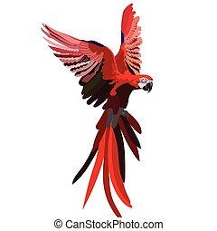 flygning, färgrik, röd, papegoja
