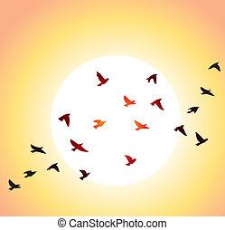 flygning, fåglar, och, blank sol