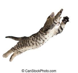 flygning, isolerat, katt, hoppning, kattunge, vit, eller