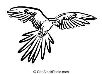 flygning, parrot.