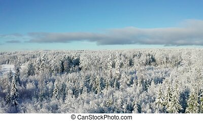 Flying above beautiful snow covered forest in cold winter...