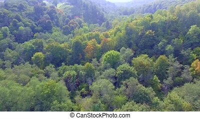 flying above green forest at autumn - flying above green...