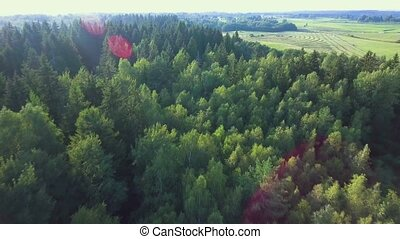flying above green forest at summer time - flying above...