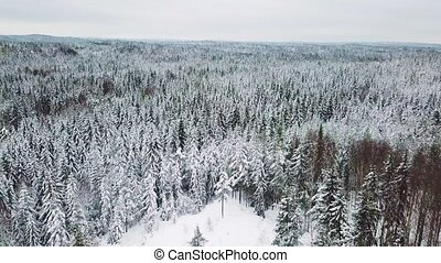 Flying above large forest in the cold winter