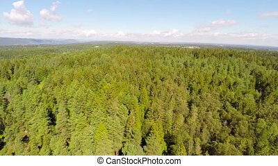 Flying above large pine forest - Camera flying away from the...