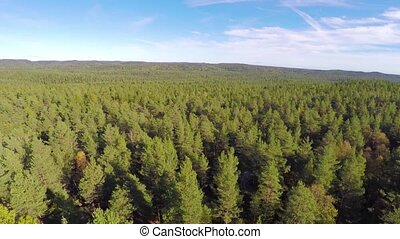 Flying above large spruce tree forest - Camera flying over a...