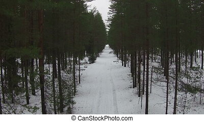 Flying Above Road in Winter Forest