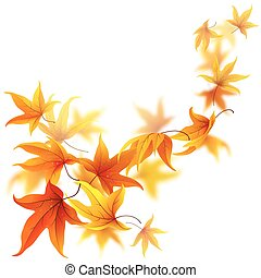Flying autumn leaves - Autumn maple leaves falling and...
