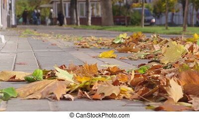 Flying autumn leaves in the wind on sidewalk