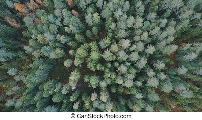 Flying away from treetops. Drone goes higher over autumn forest