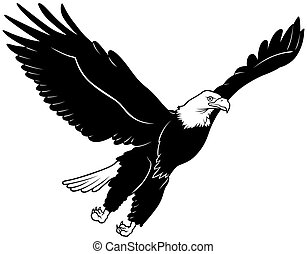 Flying Bald Eagle - Black Outline Illustration, Vector
