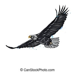 Flying bald eagle from a splash of watercolor, colored drawing, realistic