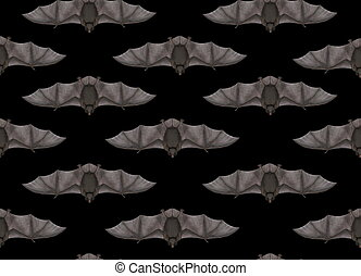 Flying bat in seamless black background - 3D render