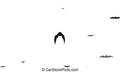 Flying bats isolated on white background - Animation flying...