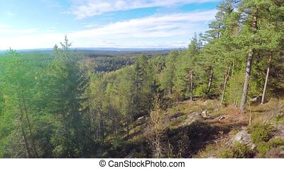 Flying between spruce trees and above large forest - Camera...