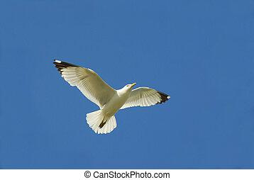 Flying seagul in blue sky