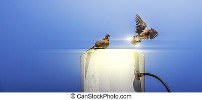 Flying Bird Little Egret in the Sky