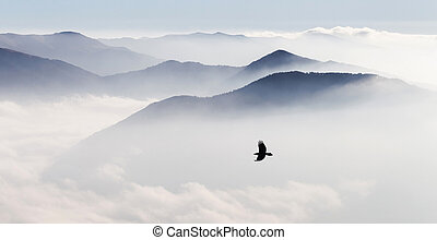 Flying bird on background of mountains silhouettes in the mist