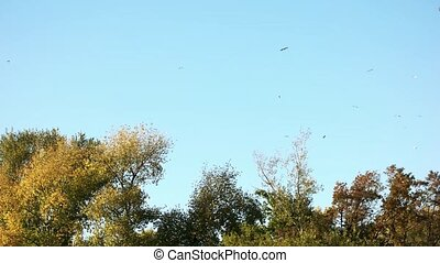 Flying birds above forest trees.