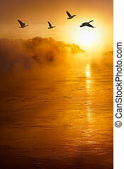 Flying birds across the river vertical image