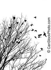 Flying birds - Black and white image of birds flying off a ...