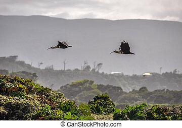 Flying birds, Chiloe Island, Chile