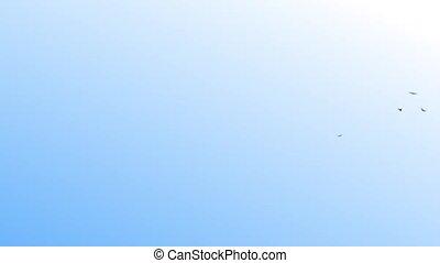 flying birds - flying, bird, birds, sky, clouds, HD,loop,...