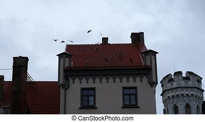 Flying birds from house roof, riga latvia