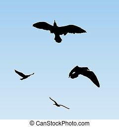 flying birds (gulls)